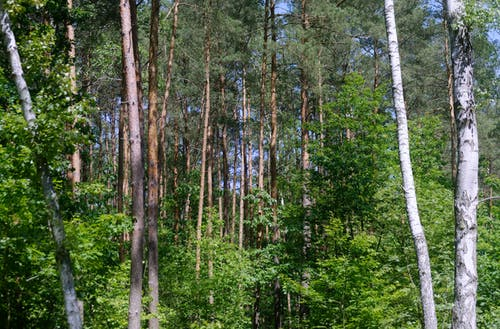 Fotobanka sbezplatnými fotkami na tému hustý les, krajina, krásny, les