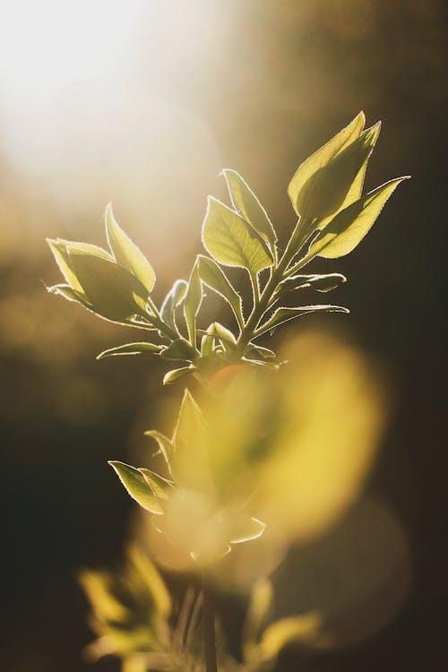 增長, 工厂, 幹, 日光 的 免费素材照片