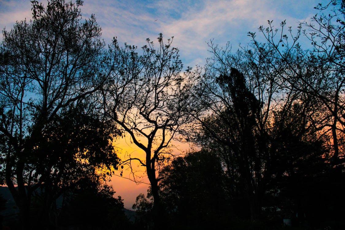 mørke, overskyet himmel, solnedgang