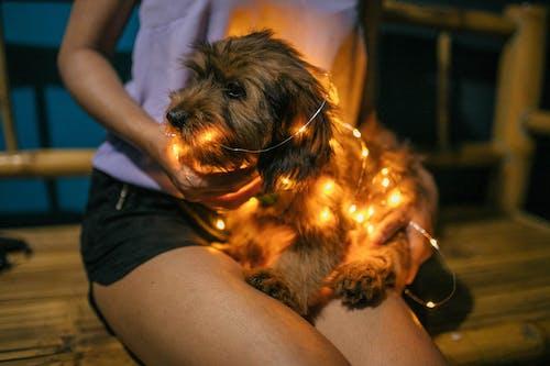 Photos gratuites de animal de compagnie, canin, chien, chiot