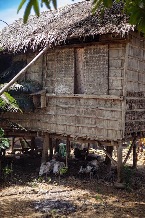 архитектура, дерево, деревянный дом
