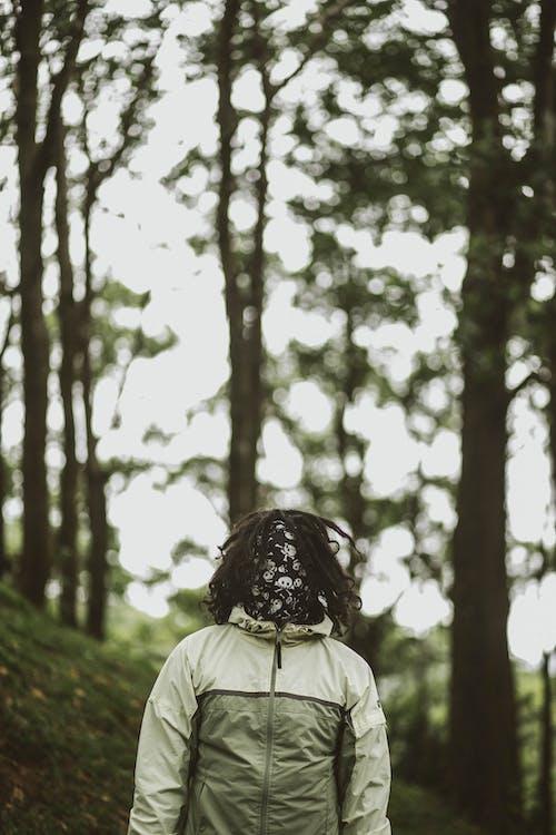 Ingyenes stockfotó álló kép, boke, dzseki, erdő témában