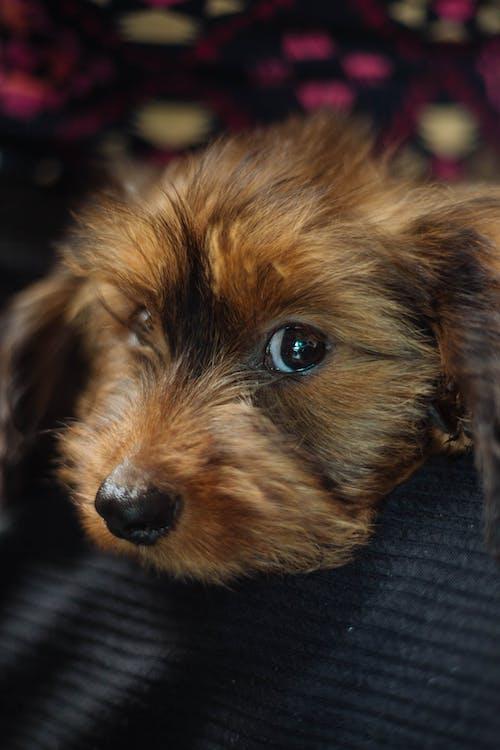 Бесплатное стоковое фото с большие глаза, щенок
