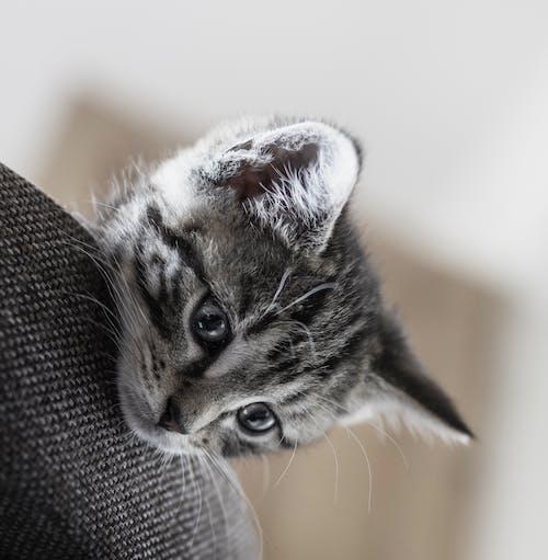 Základová fotografie zdarma na téma dítě, domácí mazlíček, fotografování zvířat, kočka