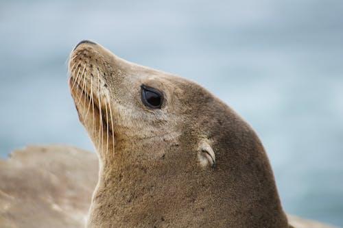 Kostenloses Stock Foto zu niedlich, säugetier, tier, tierfotografie