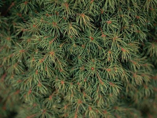 Immagine gratuita di albero, ramo, verde