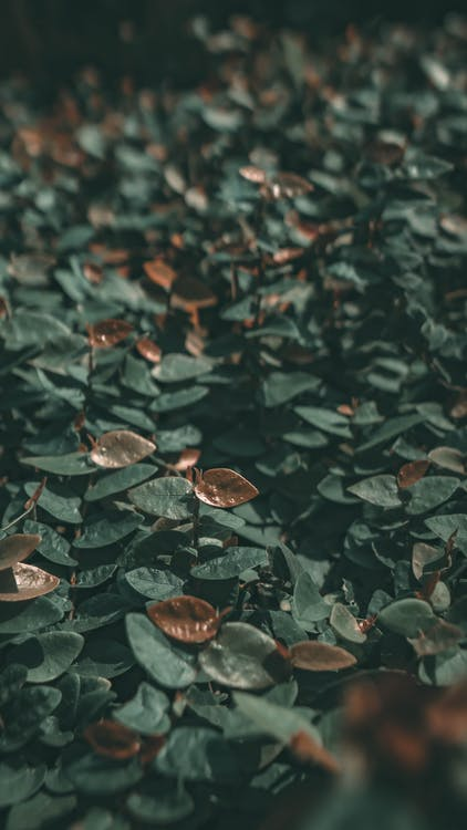 ecológico, folhas, greenary