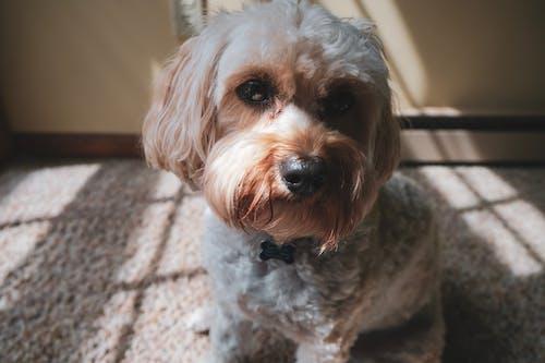 Ilmainen kuvapankkikuva tunnisteilla eläin, istuminen, koira, kotieläin