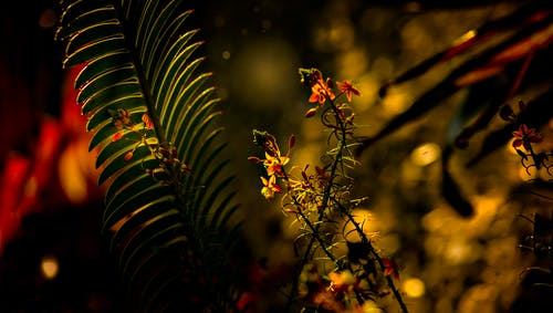 Green Fern Plant and Red Petaled Flower