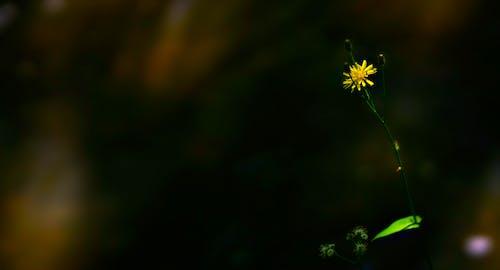 Δωρεάν στοκ φωτογραφιών με macro, ανθίζω, άνθος, έντομο