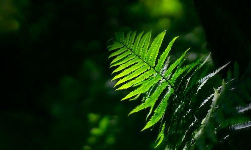宏觀, 工厂, 樹葉, 蕨類植物 的 免费素材照片