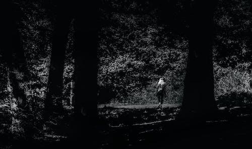 Ingyenes stockfotó fák, fekete-fehér, nő, személy témában