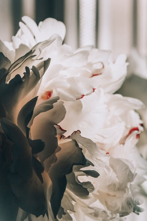 barva, bílá květina, flóra