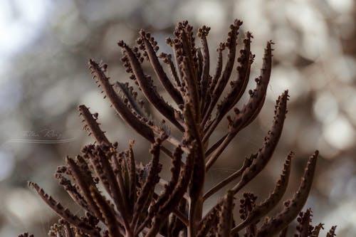 Fotos de stock gratuitas de 4k, agua dulce, belleza en la naturaleza, color