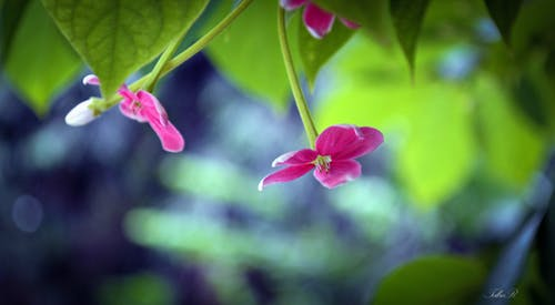 Free stock photo of 4k, 4k wallpaper, beach, beauty in nature