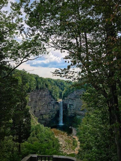 天性, 森林, 樹木, 樹林 的 免費圖庫相片