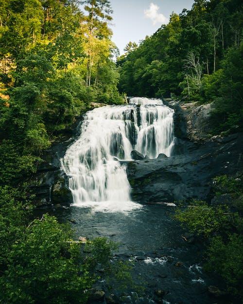 Gratis stockfoto met bomen, buiten, cascade, kreek