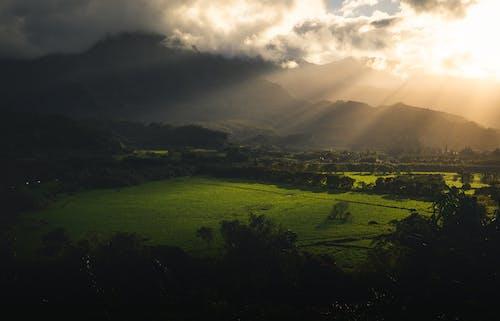 ハワイ, ファーム, フィールド, 作物の無料の写真素材