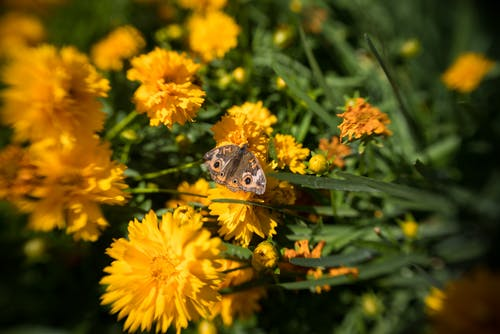 Free stock photo of botanical garden, butterflies, butterfly, color