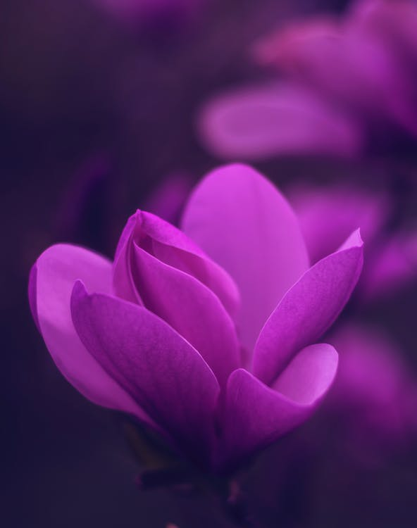 berkembang, bunga, flora