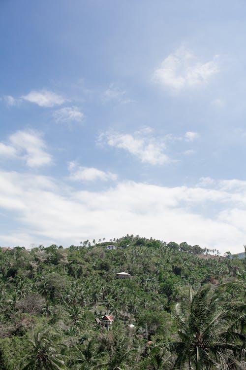 경치, 경치가 좋은, 구름, 낮의 무료 스톡 사진