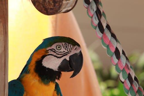 Fotobanka sbezplatnými fotkami na tému papagáj ara