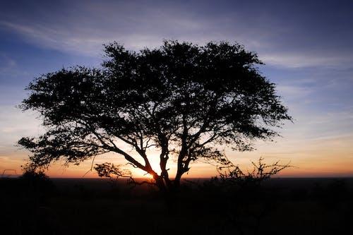 Free stock photo of africa, savanna, serengeti