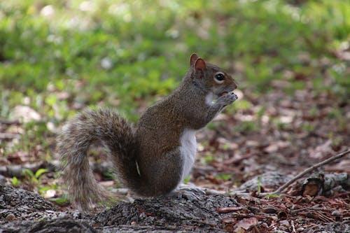Fotobanka sbezplatnými fotkami na tému veverička