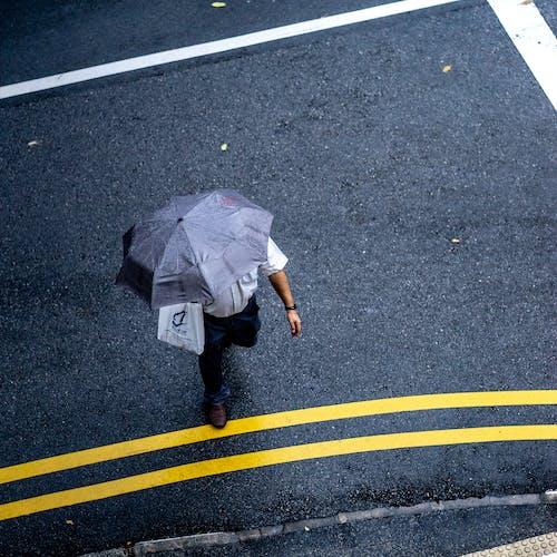 おとこ, アスファルト, 交差点, 傘の無料の写真素材