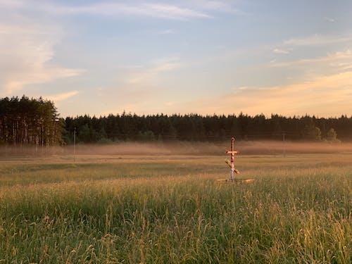 들판, 숲, 시골, 일몰의 무료 스톡 사진