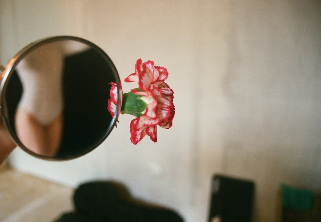 Pink and White Petaled Flower Near the Mirror