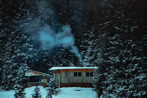 Photo of Cabin Surrounded by Pine Trees