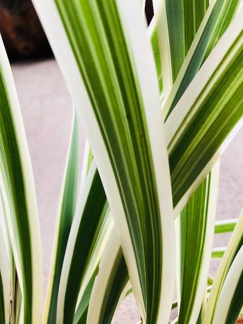 Fotos de stock gratuitas de hoja, Planta verde, verde