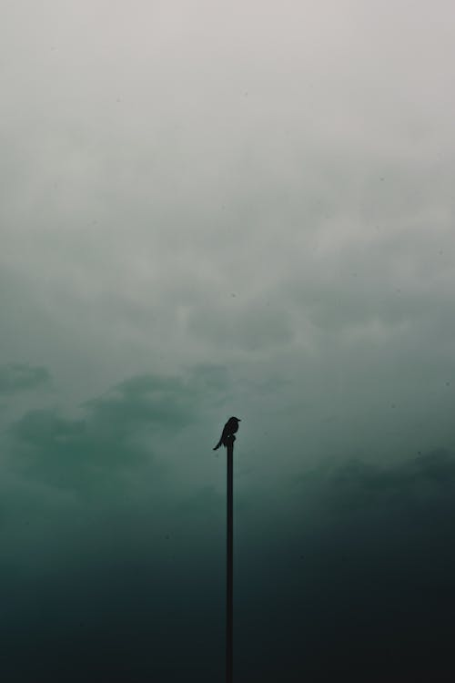 Bird Perched On Pole