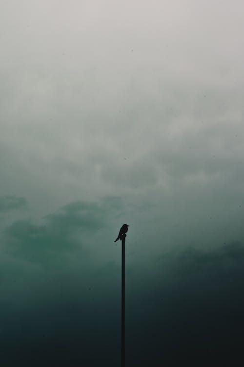 Ingyenes stockfotó ágon ülő, felhők, felhős, háttérvilágítás témában
