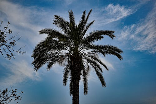 Foto profissional grátis de beleza na natureza, natureza, palma