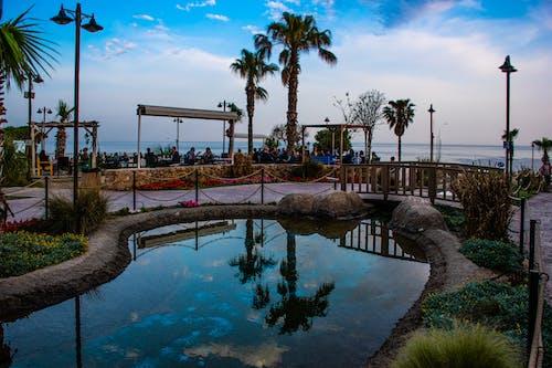 Foto profissional grátis de antalya, lado do mar, mar, palmeiras