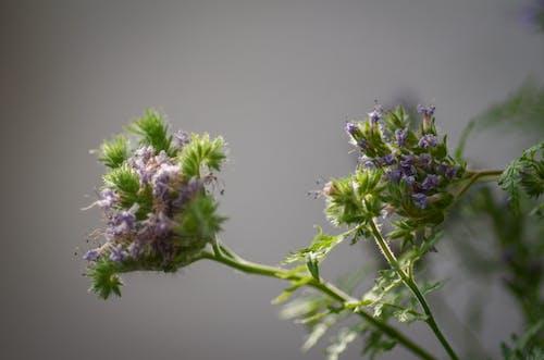 Gratis stockfoto met aroma, bloeien, bloeiend, bloem