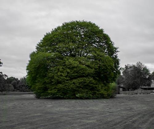 Foto profissional grátis de antigo, arquitetura, árvore, cânone
