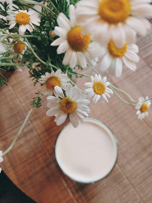 Imagine de stoc gratuită din băutură, floră, flori, înflorire