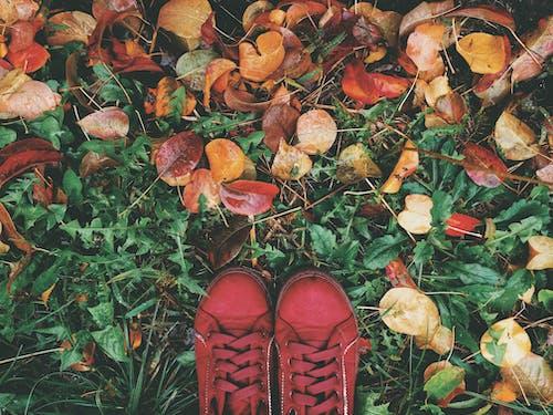 Imagine de stoc gratuită din fotografie de la înălțime, frunze, frunze uscate, iarbă