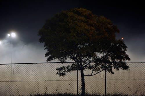 ağaç, Avustralya, çim, çit içeren Ücretsiz stok fotoğraf