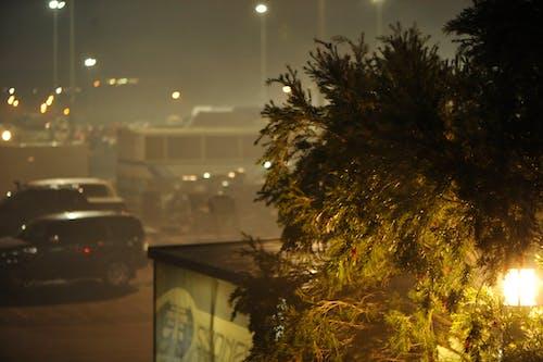 ağaç, arabalar, Avustralya, ışıklar içeren Ücretsiz stok fotoğraf
