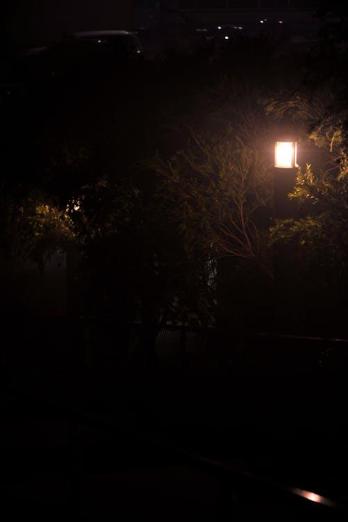 ağaçlar, Avustralya, gece, hafif yazı içeren Ücretsiz stok fotoğraf