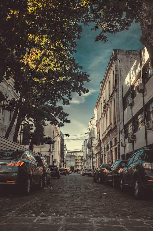 Photos gratuites de arbres, automobile, bâtiment, brésil