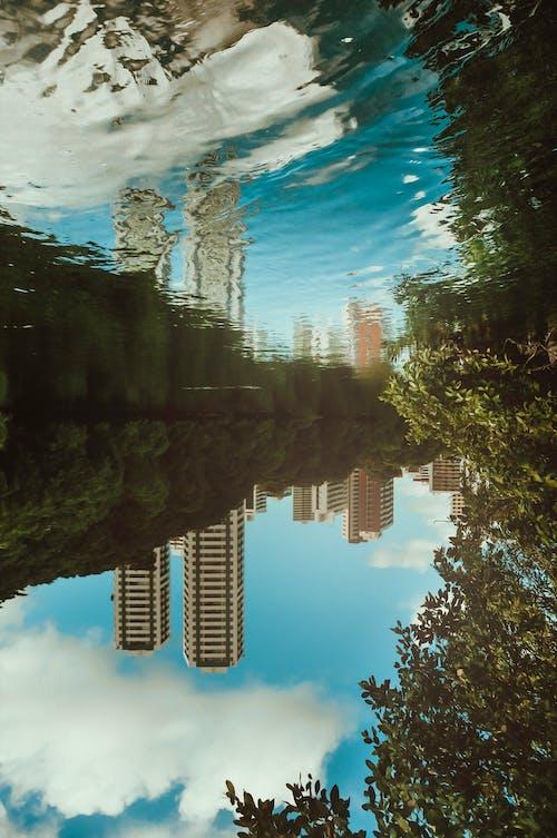 Foto d'estoc gratuïta de a l'aire lliure, aigua, arbres, brasil