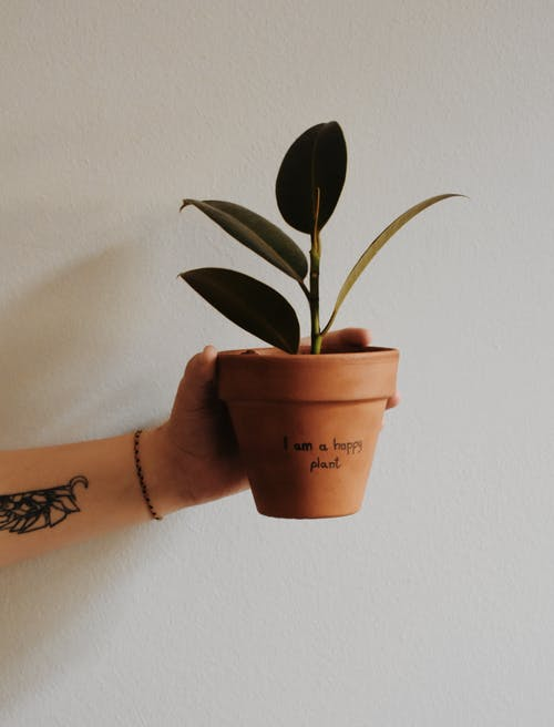 Photo of a Potted Plant