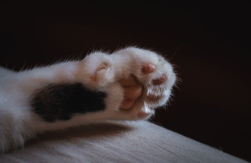 Close-Up Photo of a Cat's Paw