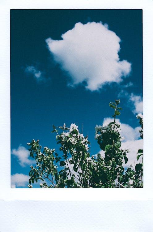 obraz, polaroid, roślina
