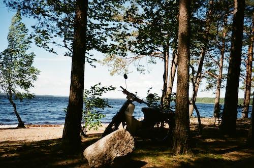 Gratis stockfoto met bomen, bossen, buiten, park